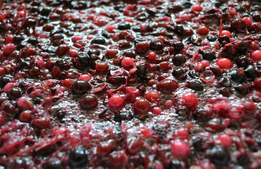hollejo uva